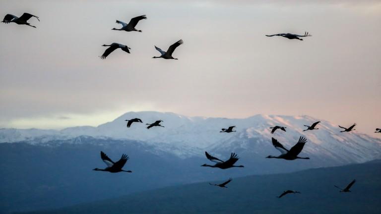 Avistamiento de aves al sur de Israel
