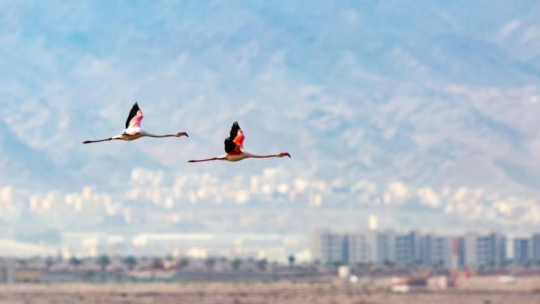 Avistamiento de aves al sur de Israel en Eliat