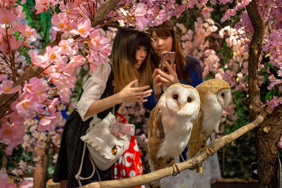 OWL Café, Un lugar para interactuar con animales