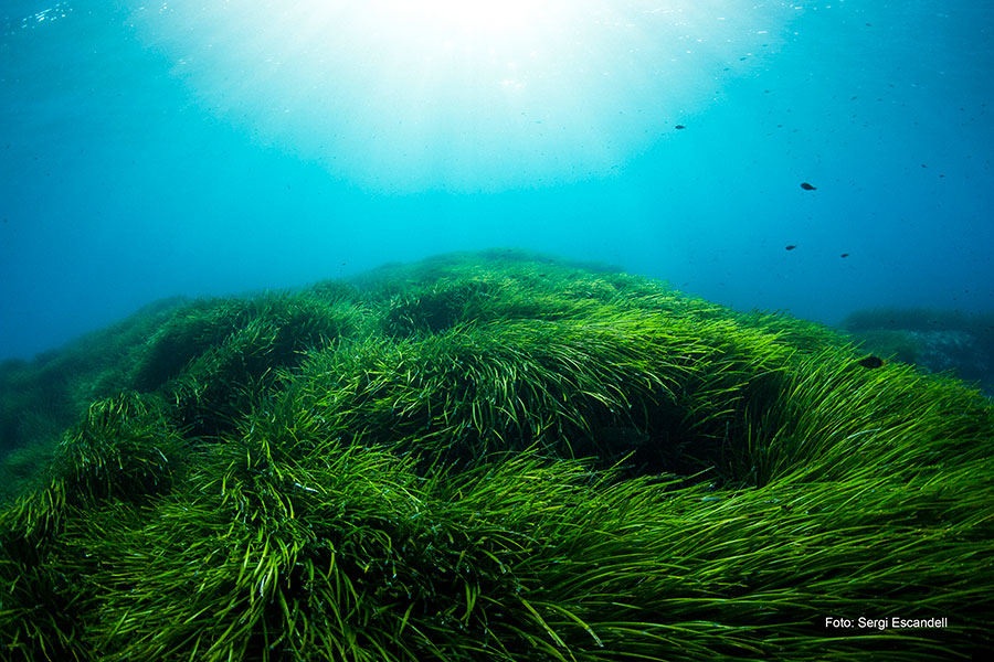 Fondos de Poseidonea en Menorca