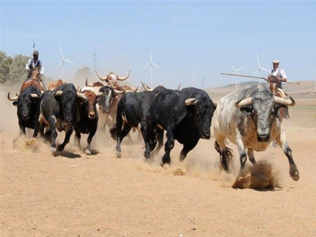 A campo Abierto, espectáculo del toro en la dehesa
