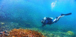 Filipinas destino de buceo