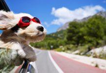 Ciudades más dog-friendly de España