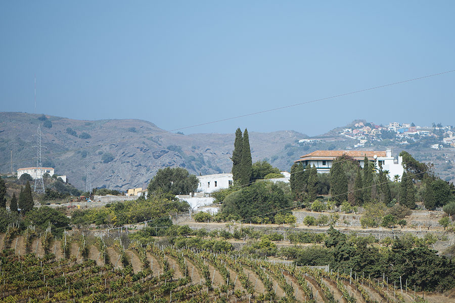 Vista de los viñedos de la bodega Higuera Mayor