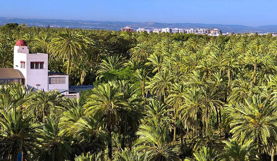 Vista del Palmeral de Elche